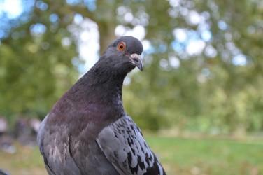 Beaky face