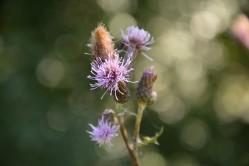Glittering stems