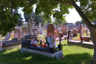 Summer graves